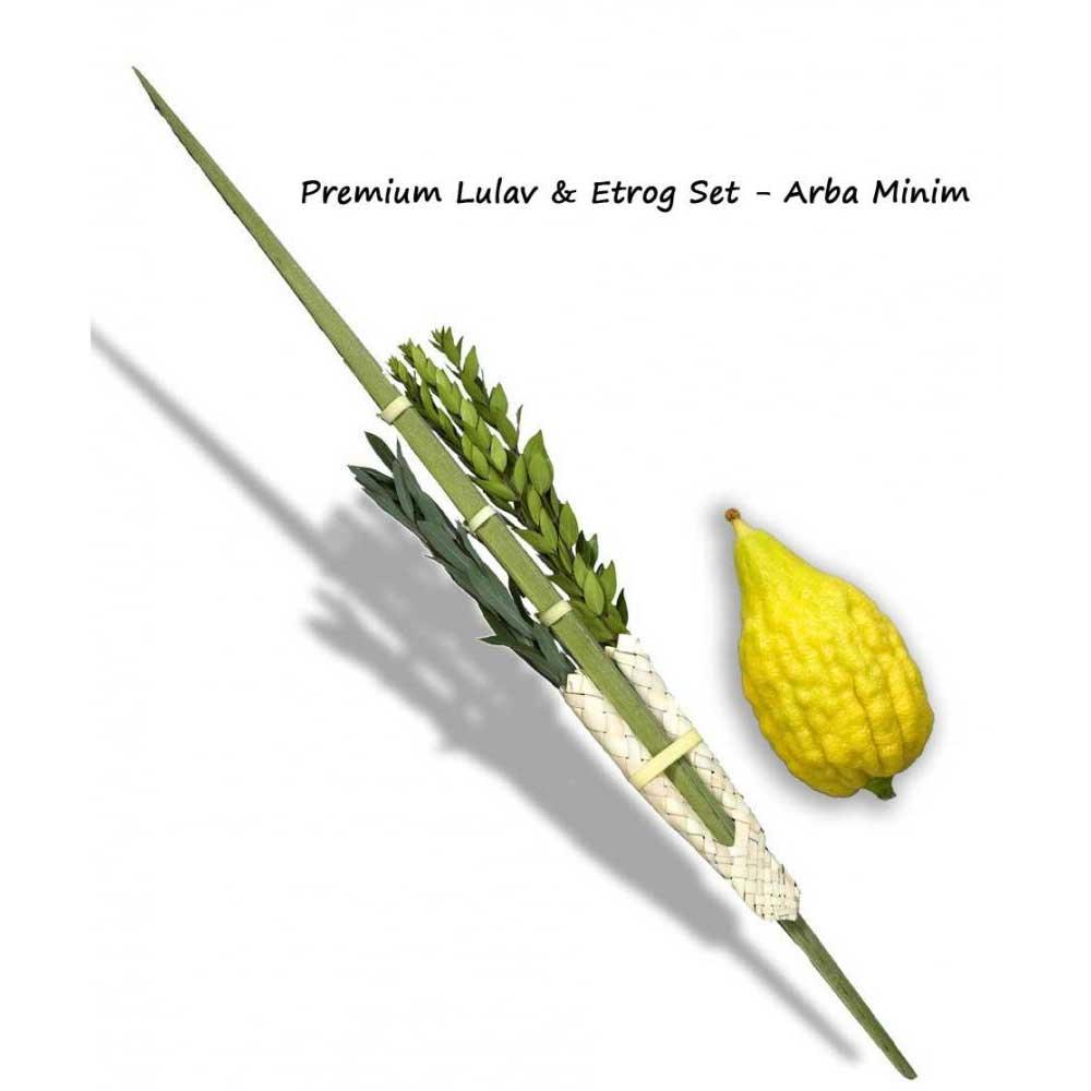 Sukkos Premium Lulav Amp Etrog Set Arba Minim 4 Species